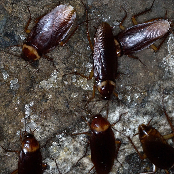 Sewer Pests